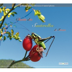 Songs of the Grasshoppers of France
