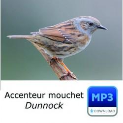 MP3 Accenteur mouchet  [spécial sonnerie]