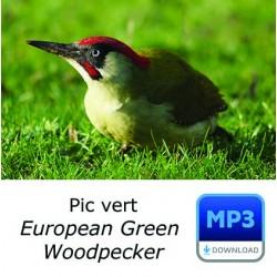 MP3 Pic vert  [spécial sonnerie]