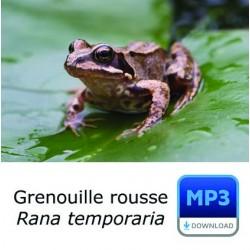 MP3 Grenouille rousse - Rana temporia
