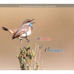 Mélodies d'oiseaux (1 CD+livret)