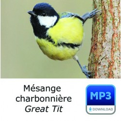 MP3 Mésange charbonnière - Parus major - Great Tit