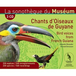 Box Songs birds of Guyana (3 CD)