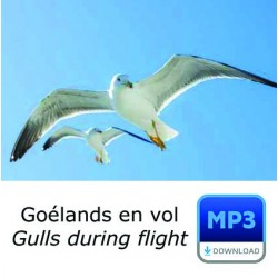 MP3 - Vol de Goéland