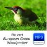 Pic vert - European Green Woodpecker
