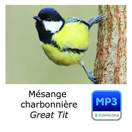 MP3 Mésange charbonnière - Parus major - Great Tit