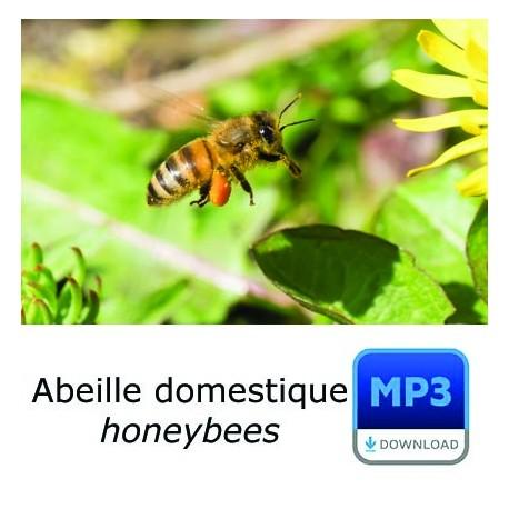 MP3 Abeille domestique