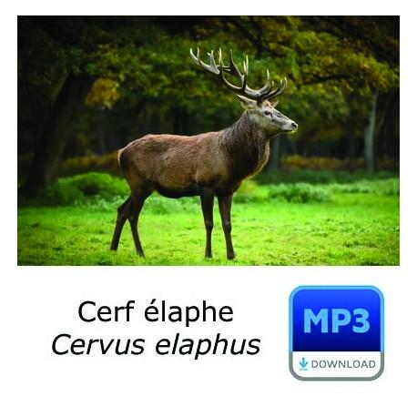 MP3 Cerf élaphe [longue durée]